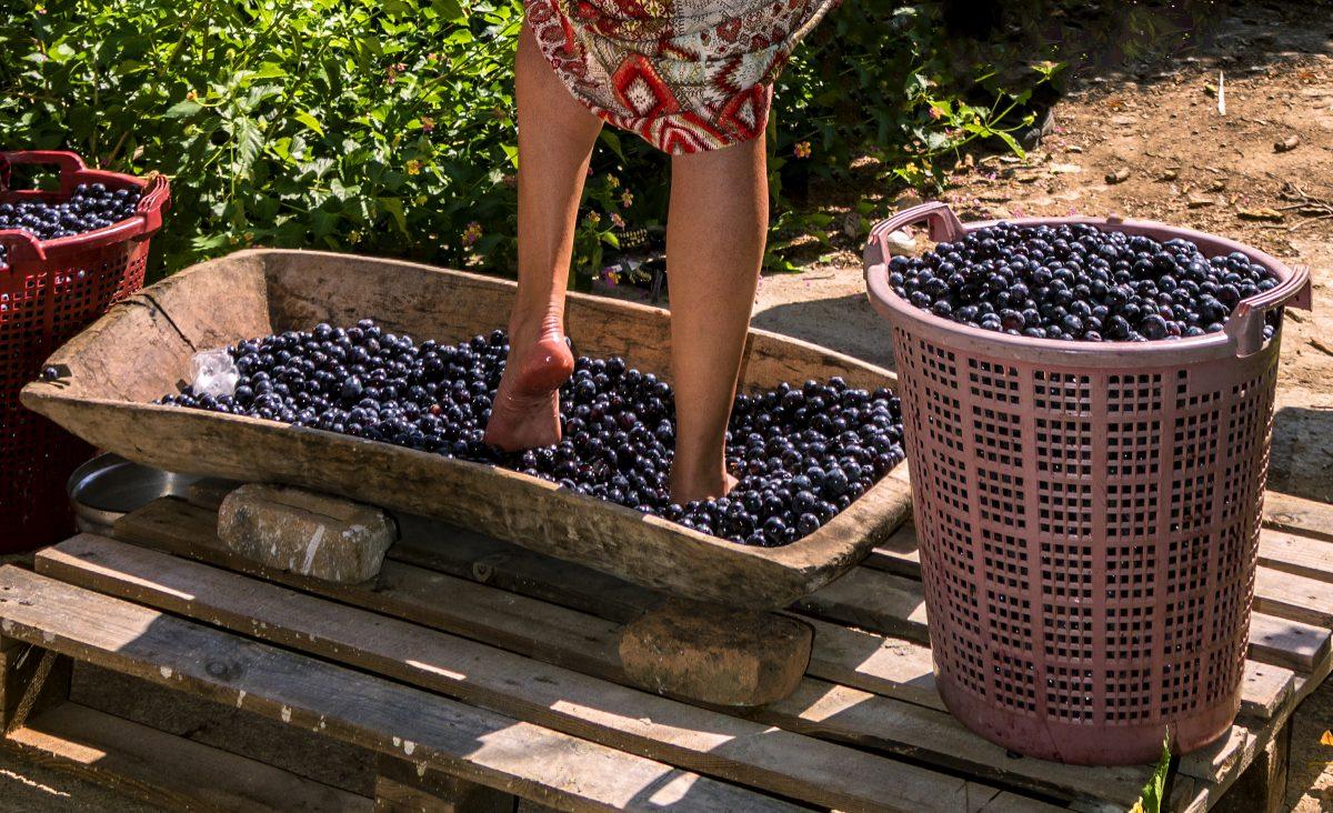 ¿Qué significa hacer vino?